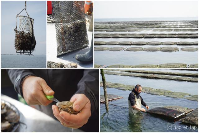 Zeeuwse zilte zaligheden ontdekken en proeven in Yerseke